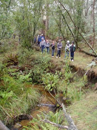 Bush walk Strathbogies